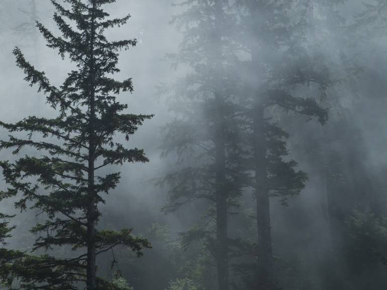 forest-fog-oregon