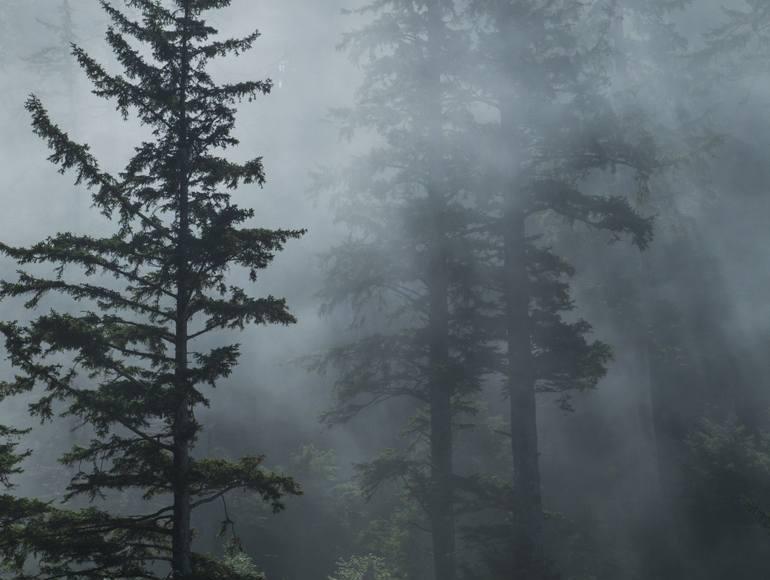 forest-fog-oregon