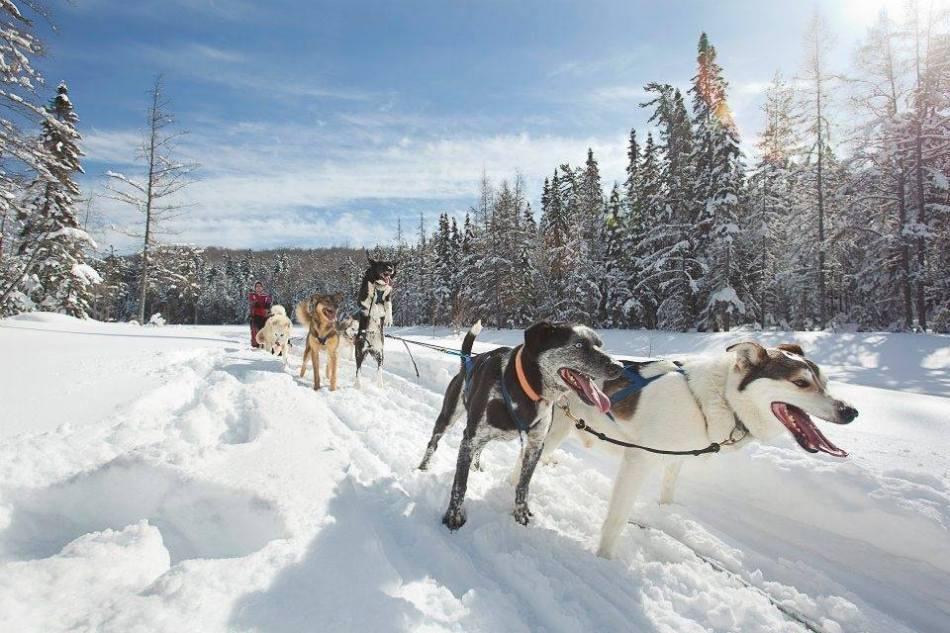 SnowForestAdventures