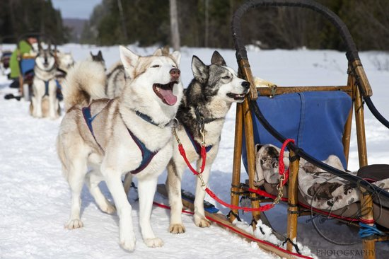 winterdance-dogsled-tours