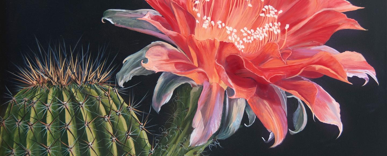 blooming-cactus-art-poem